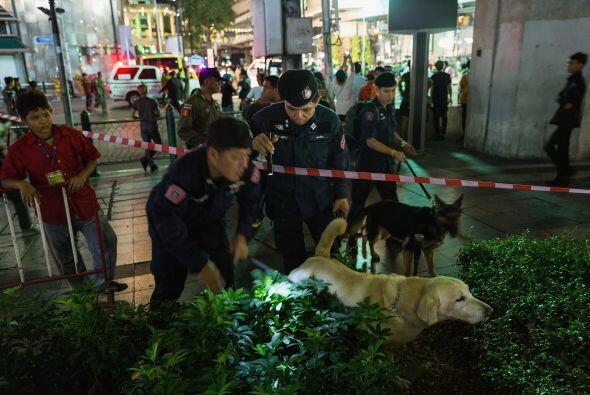 Un perro de la policía busca otros artefactos en los alrededores.