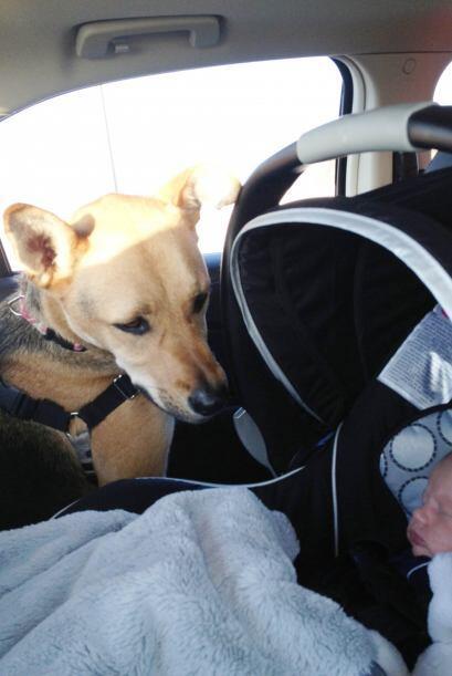 Toby es un adorable perro que desarrolló una relación muy especial con e...