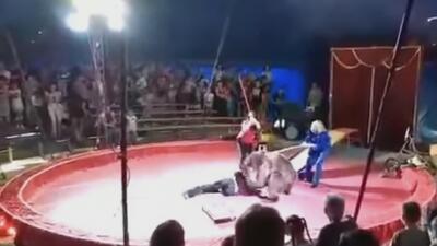 El furioso ataque de un oso a sus domadores durante un espectáculo en el circo
