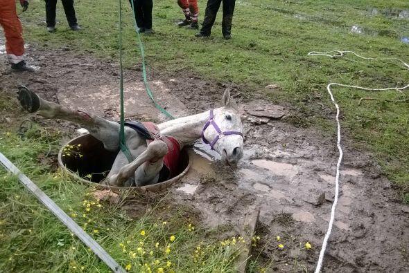 Con la ayuda del cuerpo de rescate de animales de Warwickshire, le coloc...