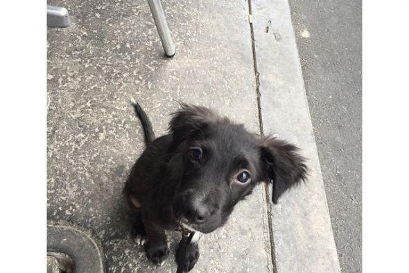 """""""Hay muchos perros allá afuera que necesitan hogares, ¡sálvenlos!"""", escr..."""