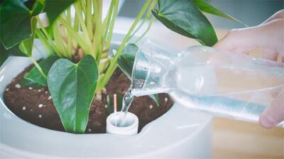 Esta maceta inteligente purifica el aire de tu entorno