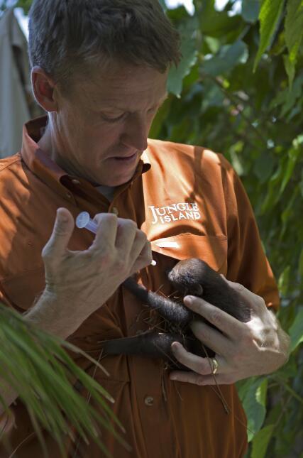 ¡Conoce al nuevo miembro de la familia de Jungle Island! Dr Jason Chatfi...