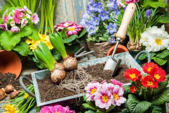 Elige una mezcla rica como base. Luego puedes crear tu propio 'compost'...