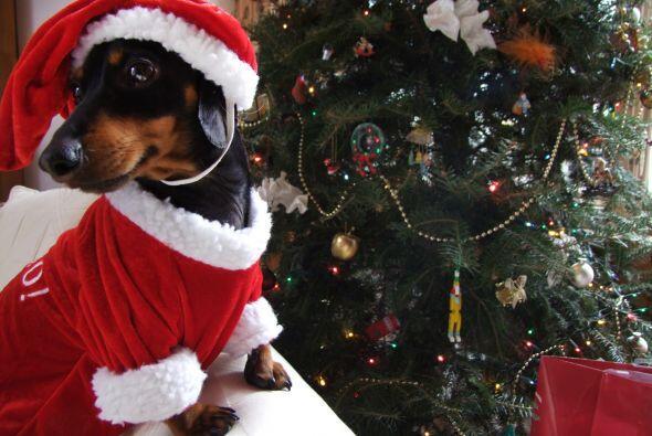 Esta Navidad está de regreso con sus increíbles 'outfits' acorde a la te...