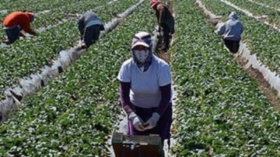 El 60% de los agricultores de Carolina del Norte tienen problemas para e...