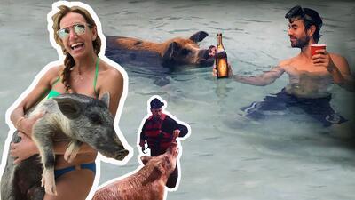 Estos puercos son tan famosos que las celebridades se quieren bañar con ellos (en serio)