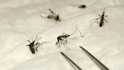 Hallan mosquitos con el virus del Nilo en el condado de Westchester