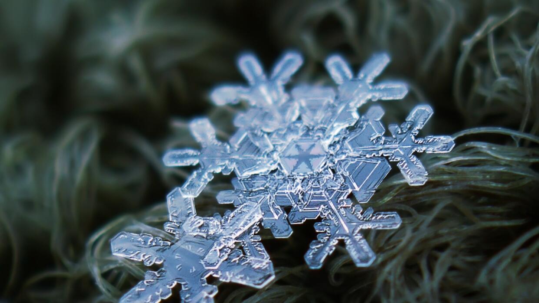 Estas son 7 simples formas de pasar una navidad más sostenible 686140062...