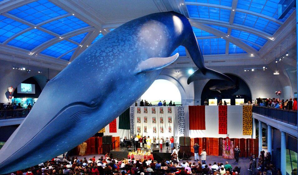 ballena museo historia natural