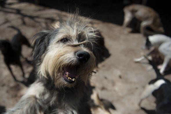 El creciente fenómeno del abandono de perros en la capital mexicana, don...