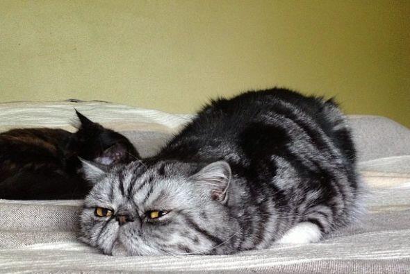 Mr. Smoosh es un gato muy serio y flojo.