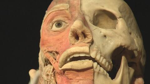 Exhibición sobre el funcionamiento del organismo humano en el Museo de l...