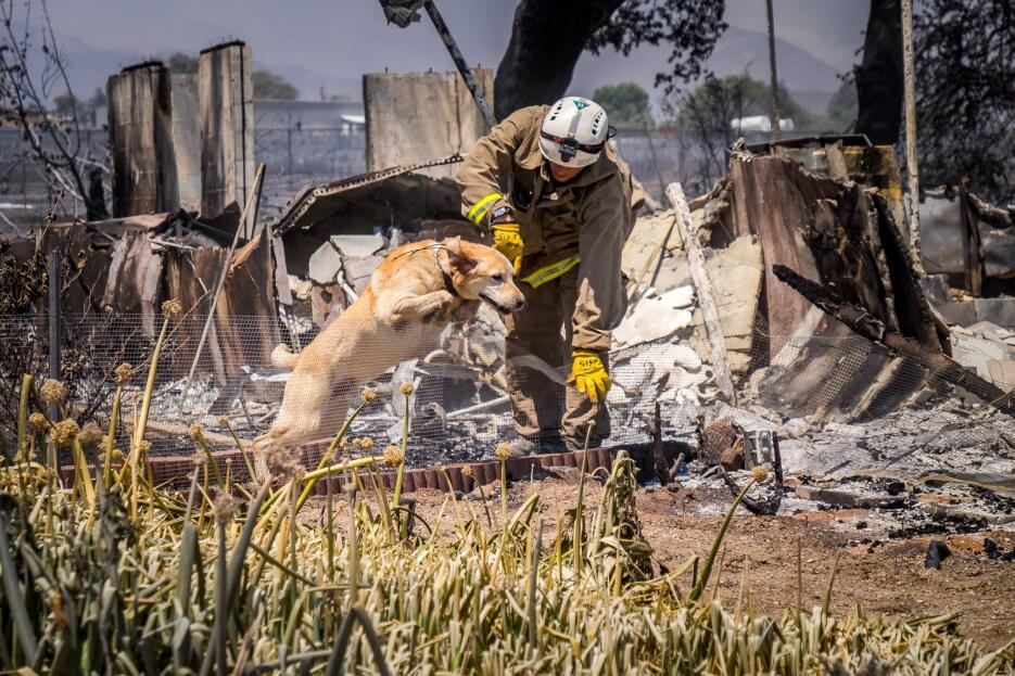 Los bomberos utilizan un perro adiestrado para detectar cadáveres.