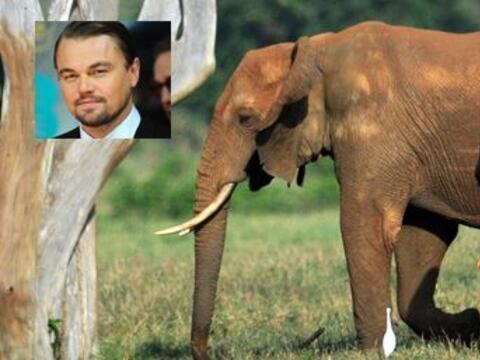Además de se un galán de cine, Leo se preocupa por el plan...
