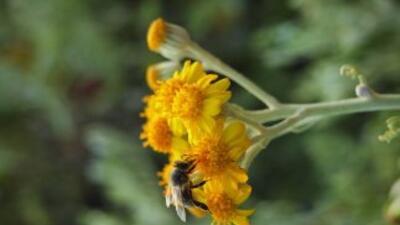 Una de las abejas.