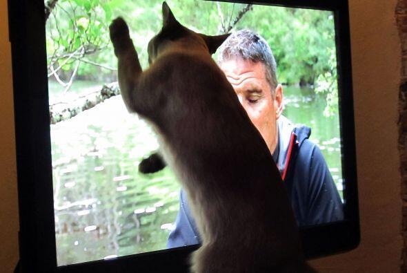 Su dueña dice que este peculiar felino realmente disfruta ver la...