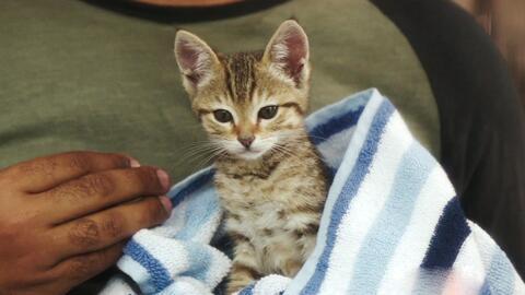 """Él es el protagonista de """"Keanu"""", una película llena de gatitos"""