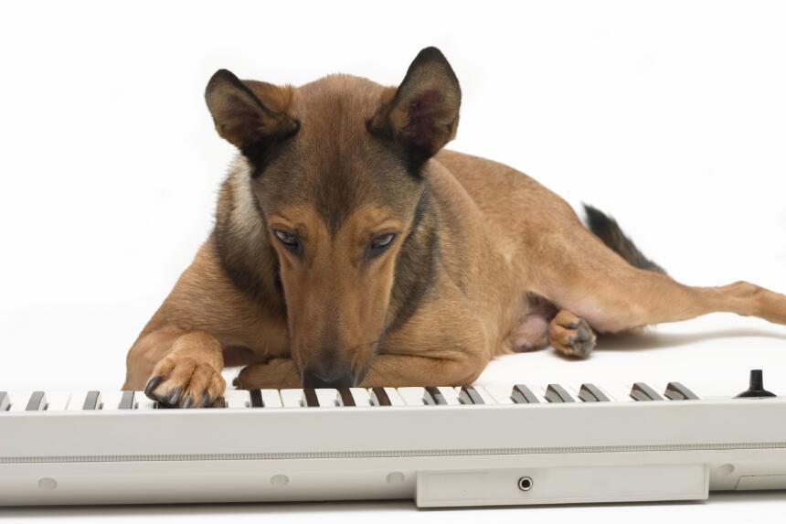 Música y perros