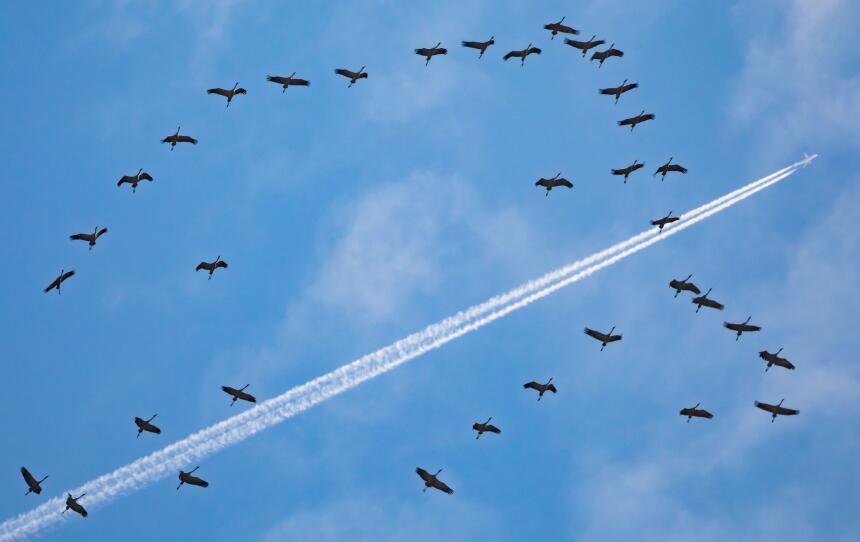 El vuelo que regresó a LA por un pasajero de más y otras 6 extrañas razo...