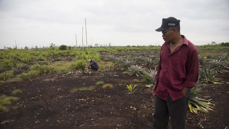Los incendios causados en la isla de Padang por la deforestación...