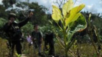 Un campesino colombiano que se negó a llevar un burro cargado de explosi...
