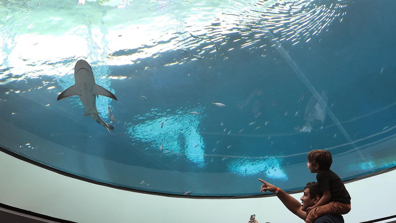 Un visitante señala un tiburón del acuario mientra sostien...