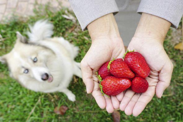 No importa qué hayas escuchado. Tu perro sí puede comer frutas y verdura...