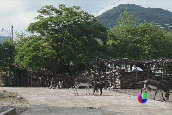 Un policía municipal de Piedras Negras, en el estado mexicano de Coahuil...