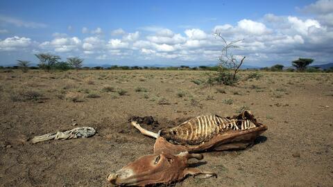 Las sequías en el este de África se han agravado por el ca...