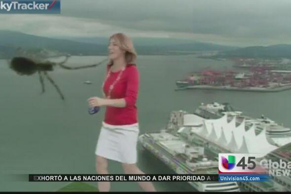 El miedo a las arañas es entendible, y mucho más cuando aparece una del...