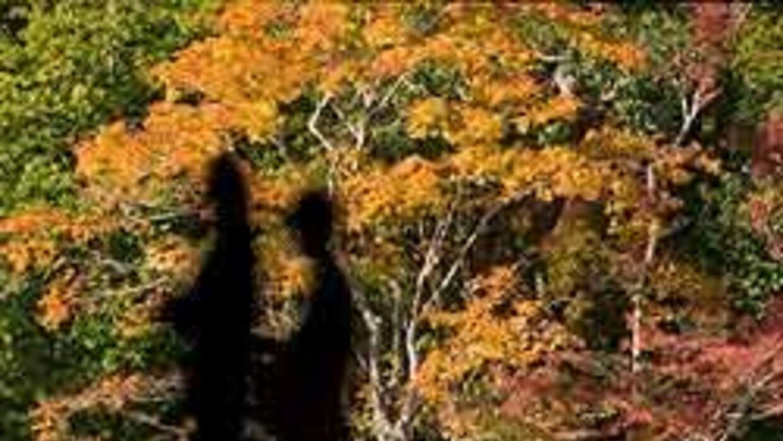 Este 22 de septiembre comenzará a regir el signo de Libra.