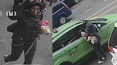 Bajo custodia policial permanece sospechosa de herir a dos mujeres dentro de un autobús
