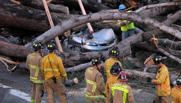Retiran el árbol que mató a una persona tras en Pacific Beach, CA.