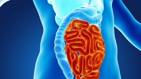 El parásito Cyclospora puede causar una severa infección i...