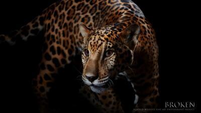 Animales rescatados se transforman en obras de arte