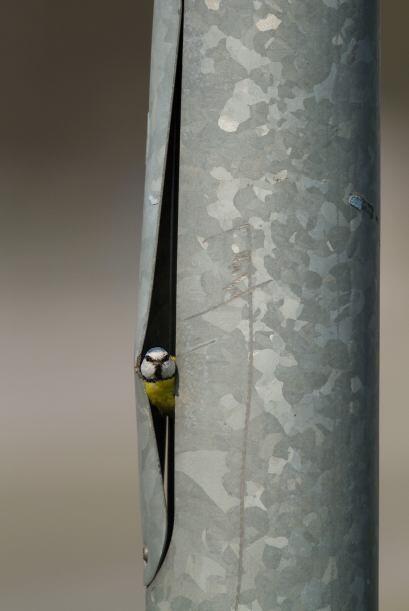 El lugar donde esta ave decidió hacer su nido es bastante particu...