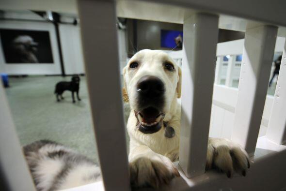 Finalmente, recuerda que castigos como mantenerlo encerrado en una jaula...