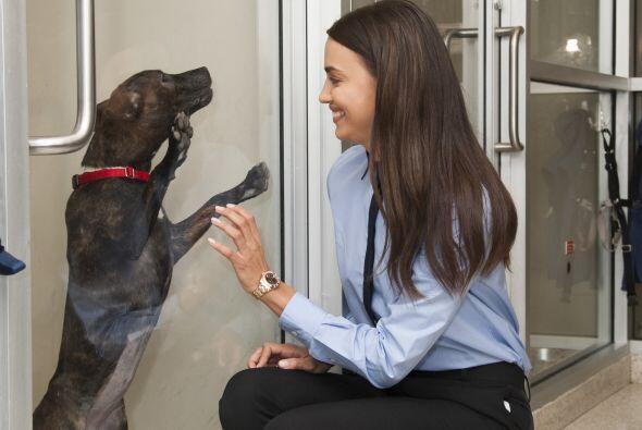 ¿Te convenció de que adoptes un perrito que necesita hogar?