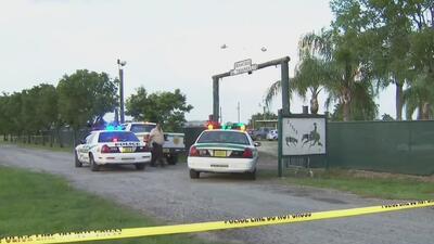 Peleas de gallos y venta ilegal de licor: las irregularidades encontradas en un rancho de Miami-Dade