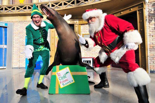 Y focas también.
