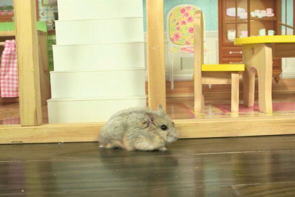 Su mansión, aunque no es precisamente para roedores, sino para jugar, pa...