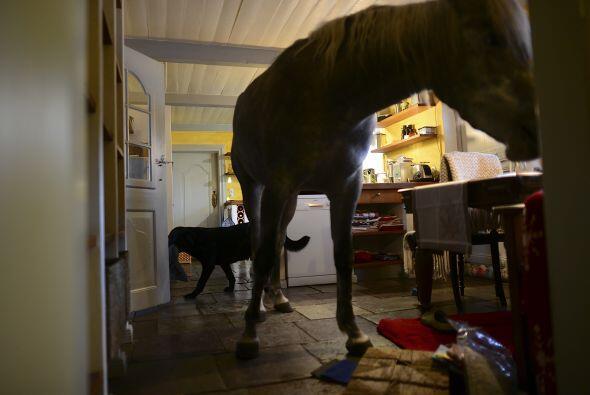 Nasar es la mascota más grande de la casa, pero no es el único ya que ti...