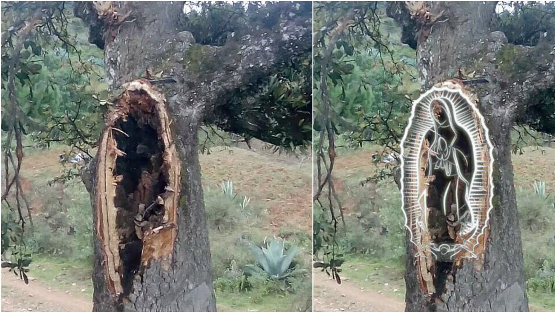 Músicos creen que la Virgen de Guadalupe se les apareció en el árbol con...