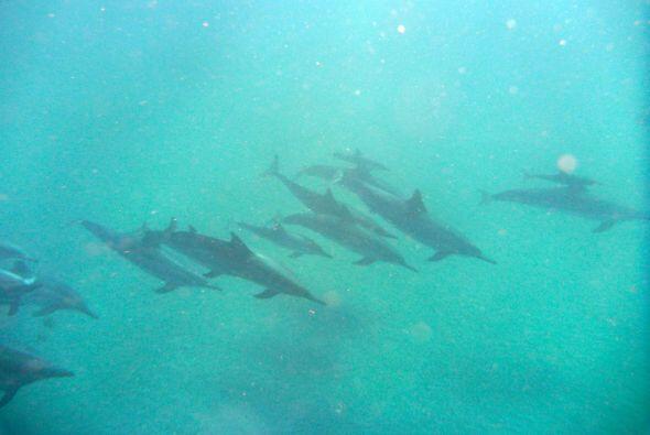 Qué impresión ver a tantos delfines juntos.