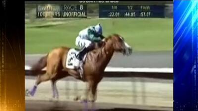 VIDEO: Jinete atropellado por caballo en pista de carreras Alameda