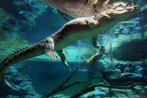 Y no es para menos,  pues estar tan cerca de estos enormes cocodrilos, s...
