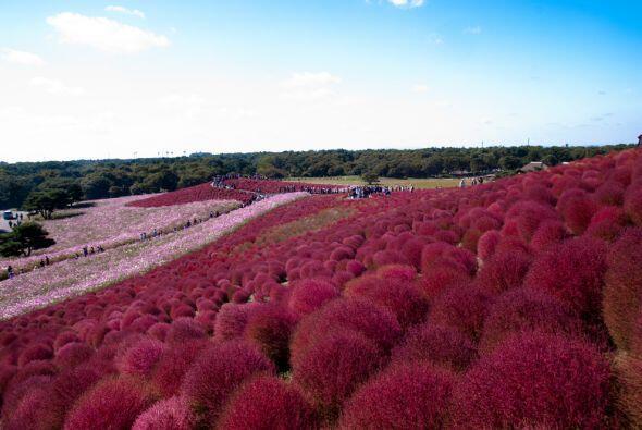 El parque Hitachi en Hitachinaka, Ibaraki, Japón