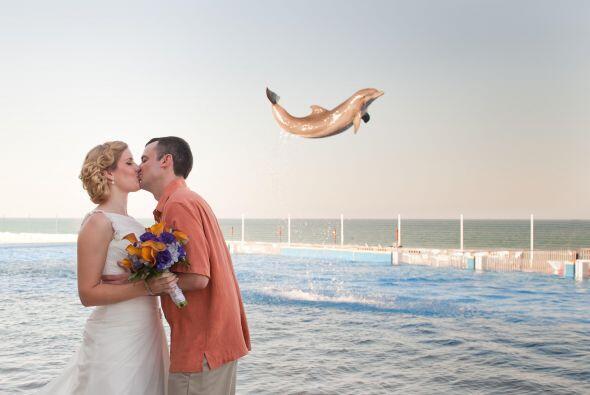 Tremenda sorpresa se llevó esta pareja al percatarse que el delfín salía...