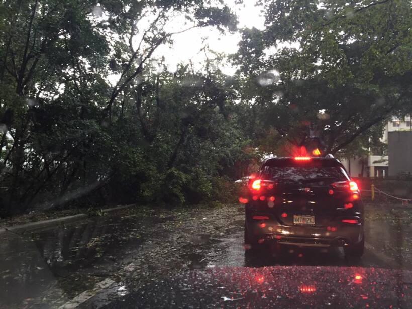 Fuertes vientos en la ciudad de Aventura, en Miami Dade, dejaron árboles...